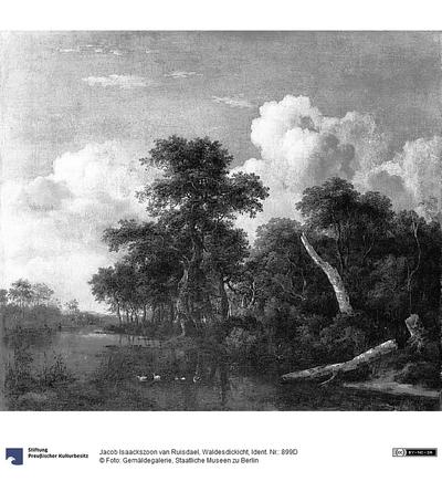 Waldesdickicht
