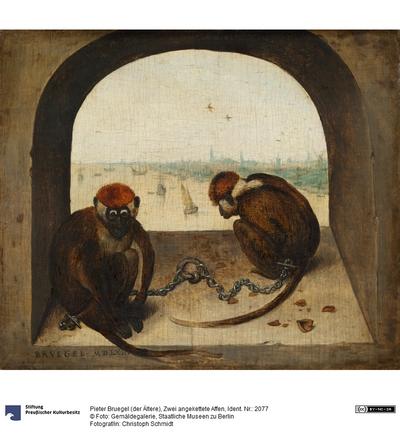 Zwei angekettete Affen