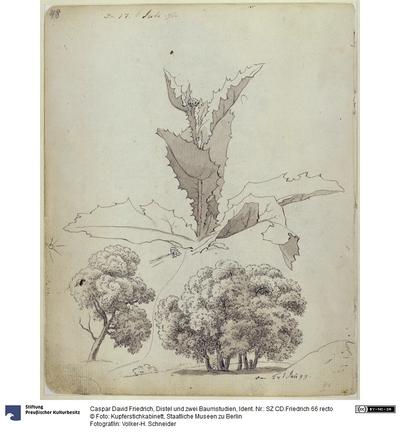 Distel und zwei Baumstudien