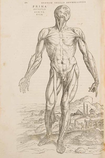 De anatoom ontleed - Vesalius in M Leuven