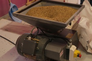 Brewery: grinding of wheat malt (2)