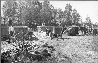AIV- foderinsättning i Vörå.