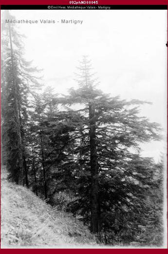 Forêts, région d'Interlaken