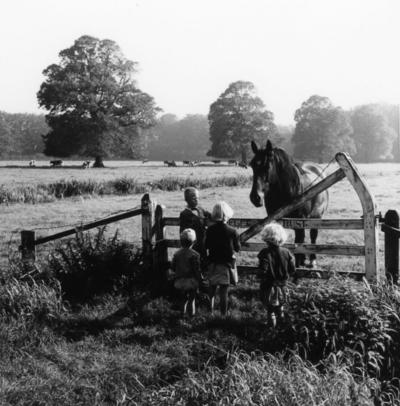 Recreatiegebied. Kinderen staan te kijken bij een paard, op de achtergrond staan koeien in de wei