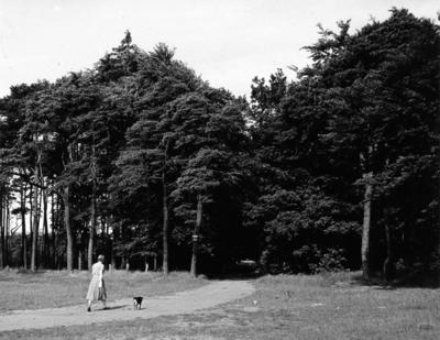 Schuttersweg. een vrouw met een hond loopt richting de Bosweg. Situatie voor de aanleg van de autoweg