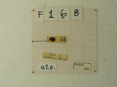Adalia (Adalia) bipunctata (Linnaeus, 1758)