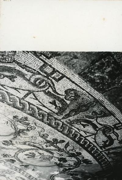 Treviso. Particolare del mosaico trovato nella piazzetta retrostante al Duomo