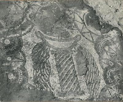S. Croce Camarina (Contrada Pirrera). Lacerto musivo della navata centrale (Foto Sopr. Ant. Siracusa; Serie D; N. 14182)