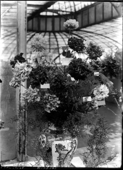 Oeillets [exposition d'horticulture, palmarium du jardin d'acclimatation, juin 1920] : [photographie de presse] / [Agence Rol]