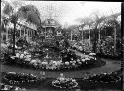 [Exposition d'horticulture, palmarium du jardin d'acclimatation, juin 1920] : [photographie de presse] / [Agence Rol]