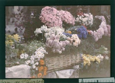 Banc de fleuriste : [photographie] / [non identifié]