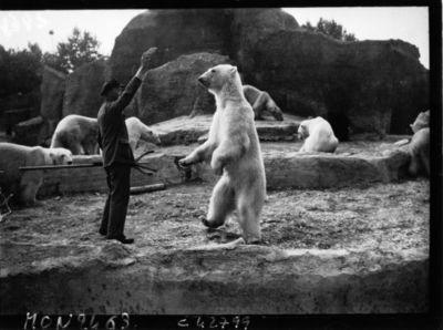 Gardien donnant à manger à un ours blanc : [photographie de presse] / Agence Mondial