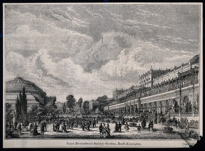 The site of the 1862 Exhibition, as redesigned for the Royal Horticultural Society: looking north, the Albert Hall in the background, left. Wood engraving by D. J. Anderson, 1871.