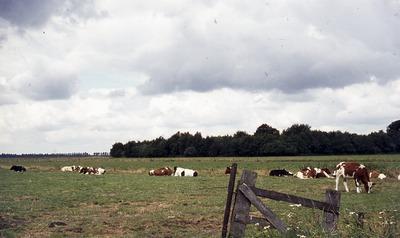 Natuur en landschap in het buitengebied: de weilanden met koeien in de Vughtse Gement gezien vanaf de eerste eendenkooi.