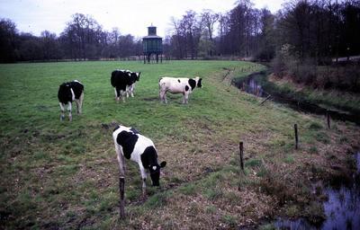 Koeien op het terrein van park Nimmerdor. Op de achtergrond de duiventil.