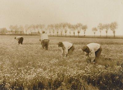 In een veld zijn vier boeren bezig vlas te snijden. Op de achtergrond zijn enkele boerderijen en een bomenrij zichtbaar.