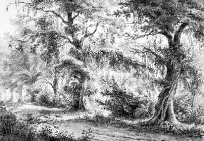 Suriname Laan van Fortonne buiten Paramaribo , tekening van Huygens