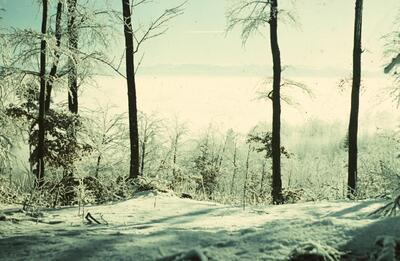 Fotografie   Geissfluh, Bäume im Raureif