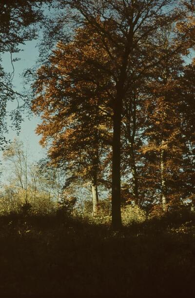 Fotografie   Liestal, Burghalden