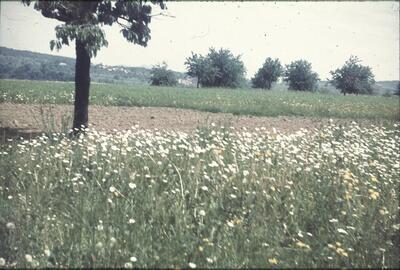 Wintersingen, blühende Magerwiese
