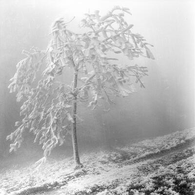 Oltingen, Schafmatt, Nebel & Raureif