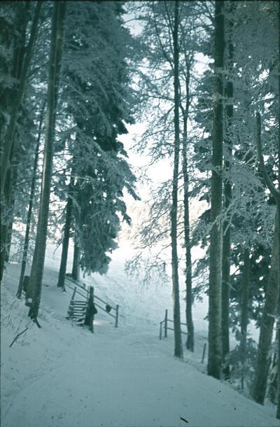 Waldenburg, Waldweide, Winterlandschaft