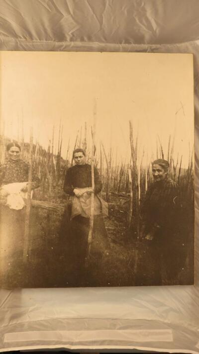 Fotographie 3 Frauen im Rebberg