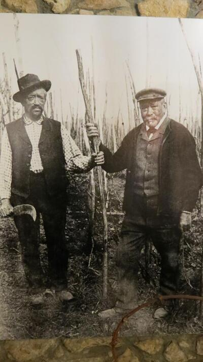 Fotographie Zwei Weinbauern im Rebberg an der Arbeit