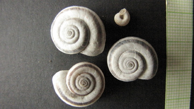 Mollusca gyűjtemény