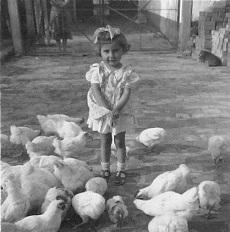 Kislány a baromfiak között