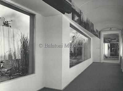 A Balatoni Múzeum 1986-os állandó kiállítása - madárvilág