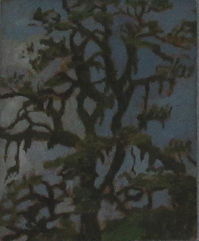 Öreg tölgyfa ősszel