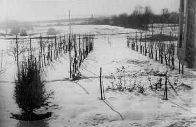 Vajkai Aurél kertje télen