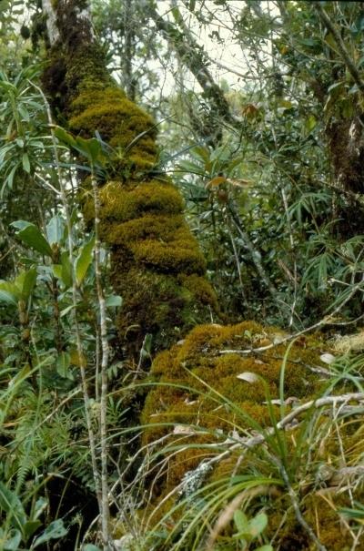 Gutin-hegység