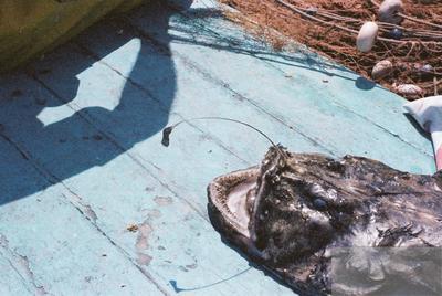Fonds Henri-Paul Brémondy : Poisson - Photographie en lien avec le corpus sonore La pêche traditionnelle varoise dans les années 1970