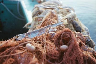 Fonds Henri-Paul Brémondy : Poisson capturé dans le filet - Photographie en lien avec le corpus sonore La pêche traditionnelle varoise dans les années 1970