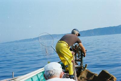 Fonds Henri-Paul Brémondy : Un pêcheur récupère le filet de pêche de la mer - Photographie en lien avec le corpus sonore La pêche traditionnelle varoise dans les années 1970