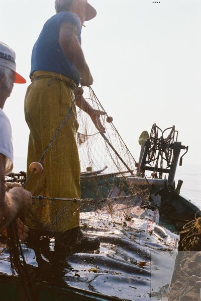Fonds Henri-Paul Brémondy : Deux pêcheurs récupèrent le filet de pêche de la mer - Photographie en lien avec le corpus sonore La pêche traditionnelle varoise dans les années 1970
