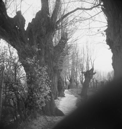 Allschwil, Bachgraben, alte Bäume