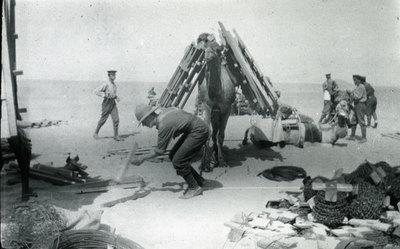 Loading camels at Shallufa