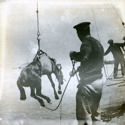 Bringing a horse aboard a ship
