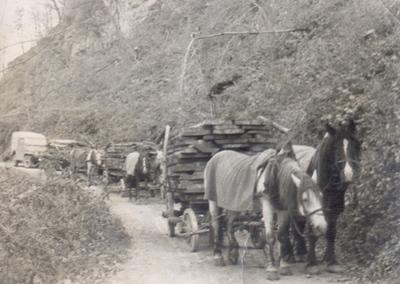 Prevoz lesa z Dobovca