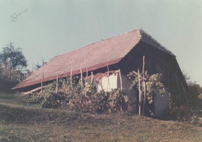 Vinograd in v zemljo vkopana zidanica