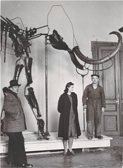 Določitev starosti mamuta