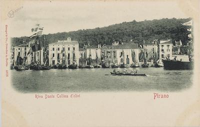 Pirano, riva Dante collina d' olivi