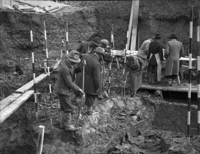 Odkopavanje mamutovega okostja