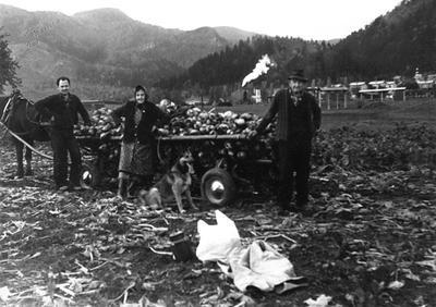 Zavelcinovi na Belskem polju s pridelkom okrog 1980