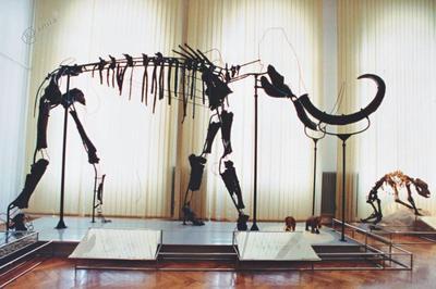 Okostje mamuta v Prirodoslovnem muzeju Slovenije