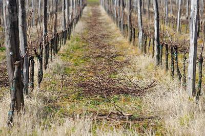 Delo v vinogradu se nikoli ne konča