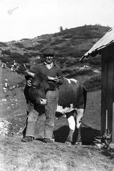 Pastir Tonej Dobravec z Lenčkovim bikom (ok. 1935)